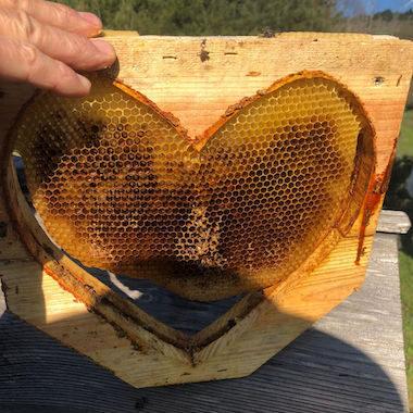 honeylove
